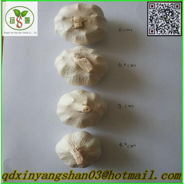 Price Of Fresh Chinese Garlic Specification 4.5cm 5.0 cm 5.5cm 6.0cm #5 image