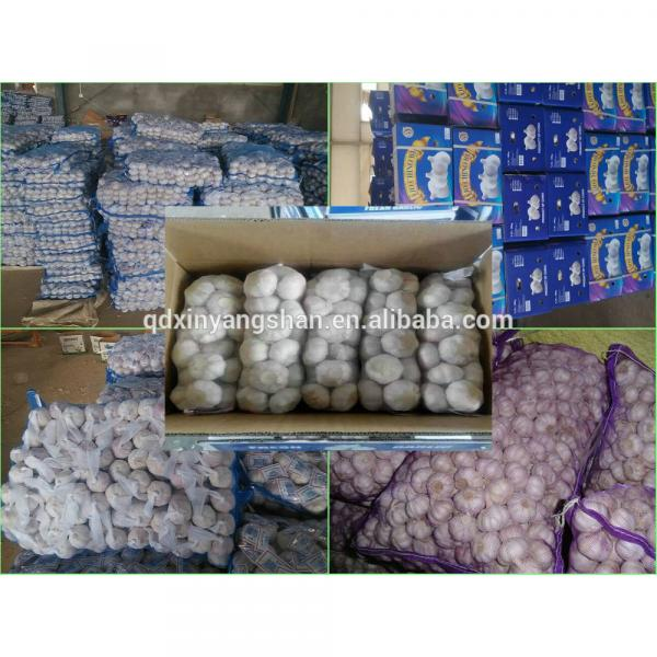 Chinese White Garlic Price Professional Exporter In China #6 image