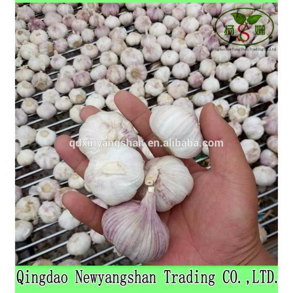 2017 Chinese Nature Normal/Purple Garlic Price #2 image
