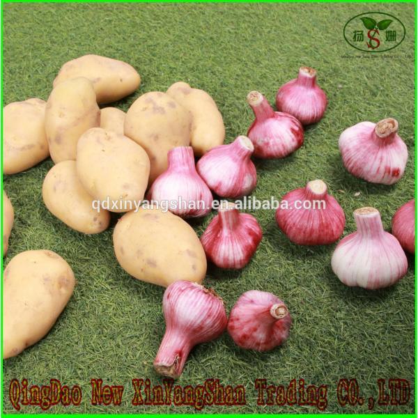 Wholesale Chinese 2017 Fresh Garlic Price Purple/Red/Pure White Garlic #6 image