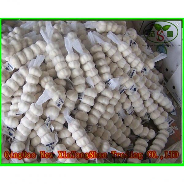 Price Of Fresh Chinese Garlic Specification 4.5cm 5.0 cm 5.5cm 6.0cm #2 image