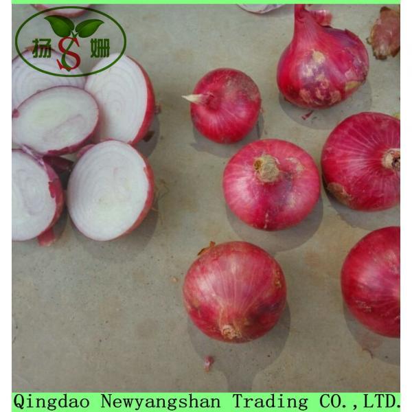 Fresh Chinese Jinxiang Garlic Price Per Ton Packing In Mesh Bag #5 image