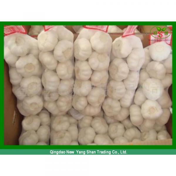 Fresh Chinese Jinxiang Garlic Price Per Ton Packing In Mesh Bag #3 image