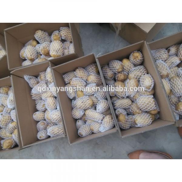 Fresh Chinese Jinxiang Garlic Price Per Ton Packing In Mesh Bag #4 image