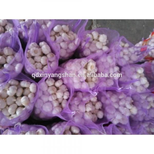 Fresh Garlic For Sale China Garlic Packing In Mesh Bag #3 image