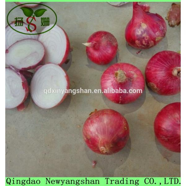 Fresh Garlic For Sale China Garlic Packing In Mesh Bag #5 image