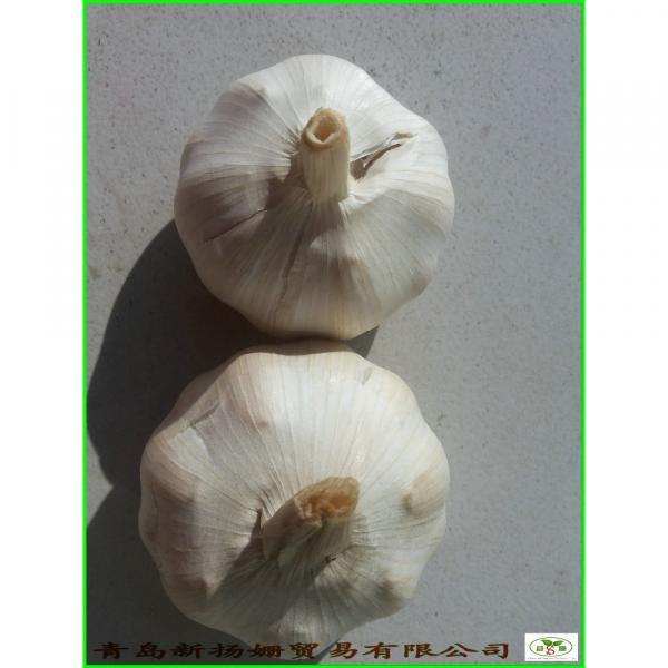 Garlic Wholesale Price Per Ton normal/Pure/peeled White Garlic #1 image