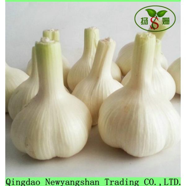 Wholesale Chinese 2017 Fresh Garlic Price Purple/Red/Pure White Garlic #2 image