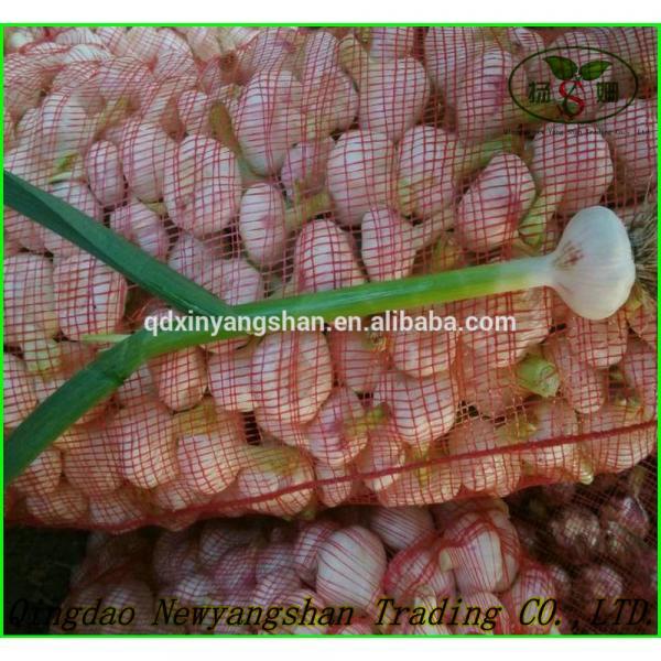 Shandong Garlic Wholesale Export Price 2017 #3 image