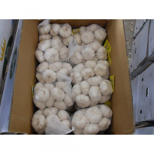 Natural Chinese Fresh white garlic wholesales #1 image