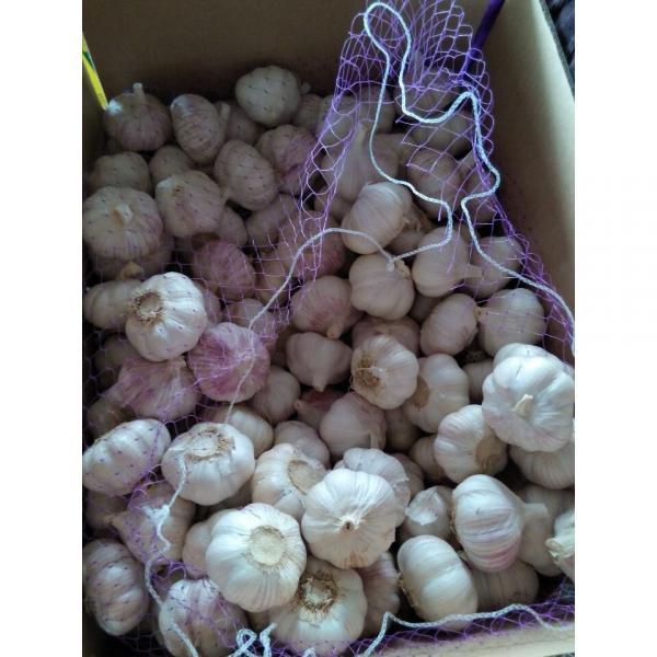 Natural Chinese Fresh white garlic wholesales #2 image