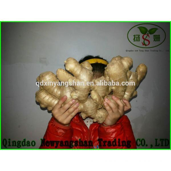 Fresh Chinese Jinxiang Garlic Price Per Ton Packing In Mesh Bag #6 image