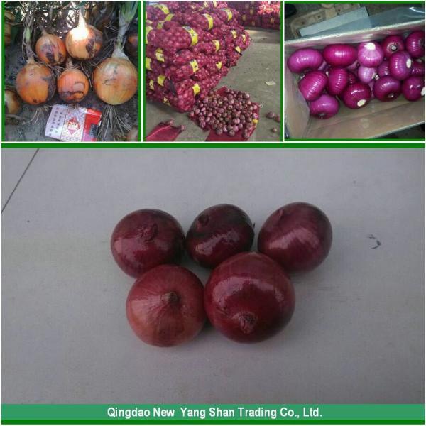 Price Of Fresh Chinese Garlic Specification 4.5cm 5.0 cm 5.5cm 6.0cm #6 image