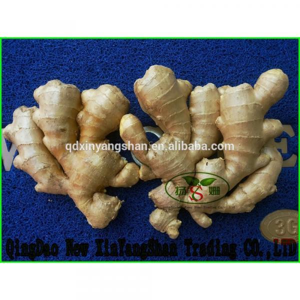 Fresh Garlic For Sale China Garlic Packing In Mesh Bag #6 image