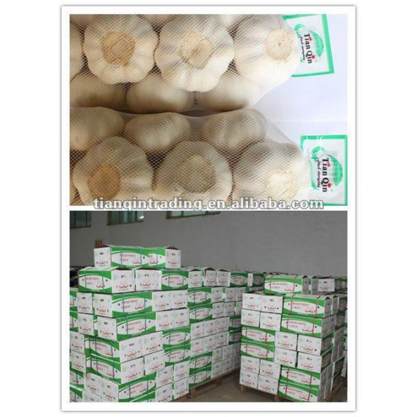 2017 Chinese new crop garlic #1 image