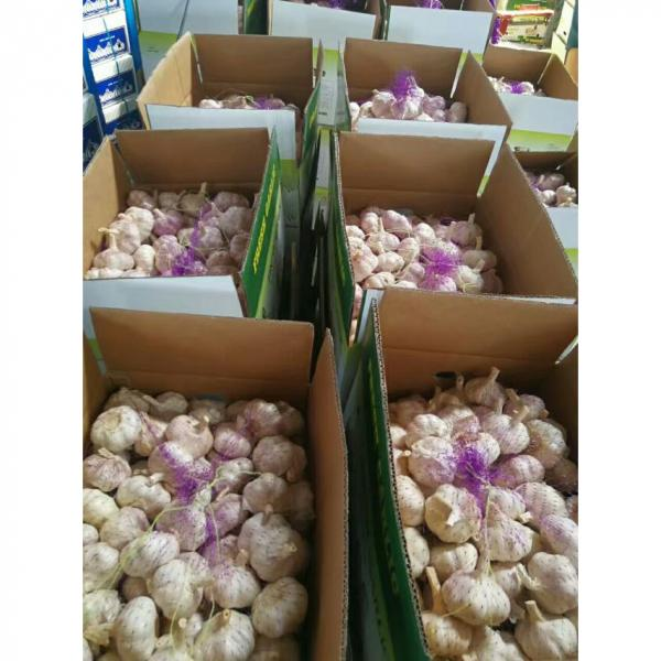 CHINA GARLIC FROM FACTORY TO SANTOS,BRAZIL #5 image