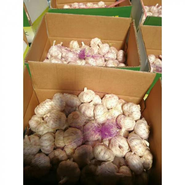 CHINA GARLIC FROM FACTORY TO SANTOS,BRAZIL #4 image