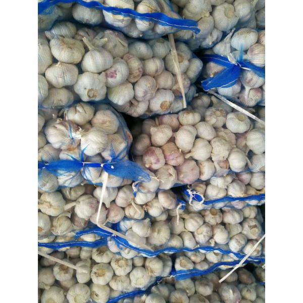 NEW CROP GARLIC WITH MESHBAG PACKAGE TO DR MARKET FROM FACTORY #4 image