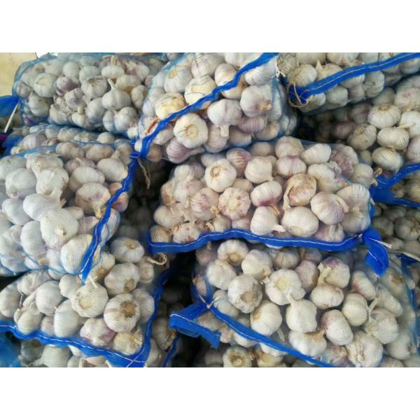 NEW CROP GARLIC WITH MESHBAG PACKAGE TO DR MARKET FROM FACTORY #3 image