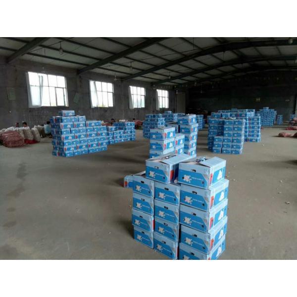 NEW CROP CHINA NORMAL WHITE GARLIC TO TUNIS #5 image