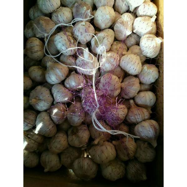 NEW CROP GARLIC WITH 10KG LOOSE CARTON PACKAGE FOR COLOMBIA MARKET #2 image