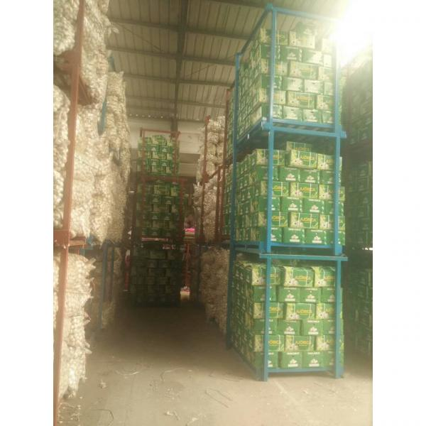 NEW CROP GARLIC WITH 10KG LOOSE CARTON PACKAGE FOR COLOMBIA MARKET #4 image