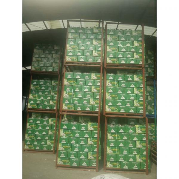 NEW CROP GARLIC WITH 10KG LOOSE CARTON PACKAGE FOR COLOMBIA MARKET #5 image