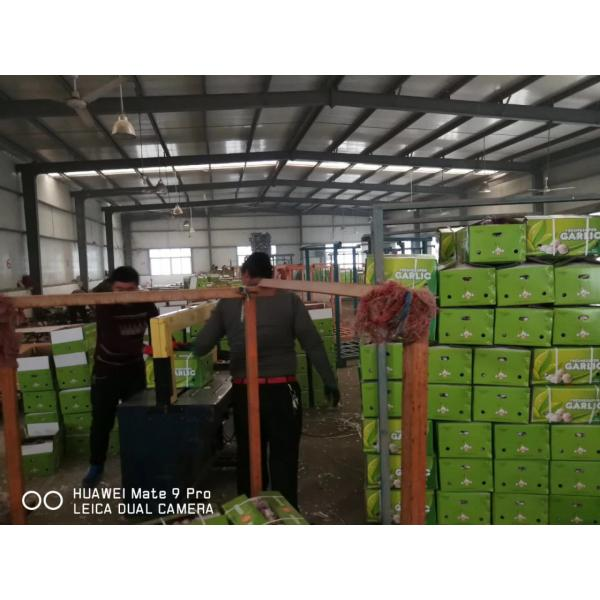 NEW CROP GARLIC WITH 10KG LOOSE CARTON PACKAGE FOR SENEGAL MARKET #3 image
