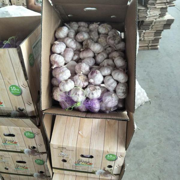2018 10KG Loose carton Normal white garlic to Brazil Market from china (New Client ) #4 image
