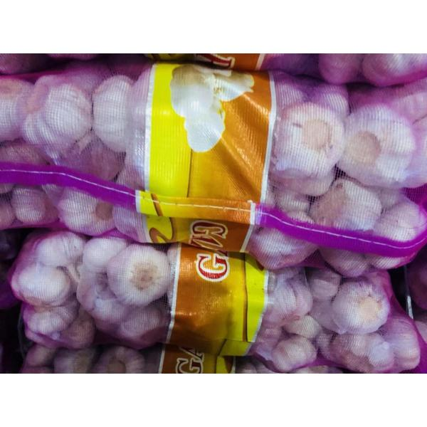 China Normal white garlic with meshabg package to Asia Market #3 image