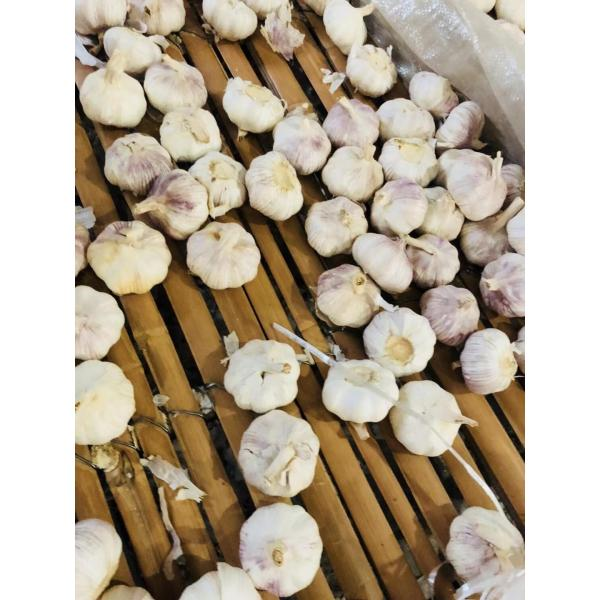 China Normal white garlic with meshabg package to Asia Market #1 image