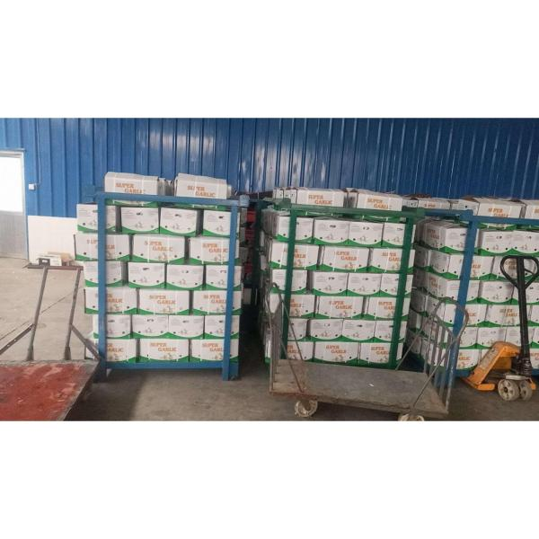 2018 china garlic with 10kg loose carton package to Brazil market . #2 image