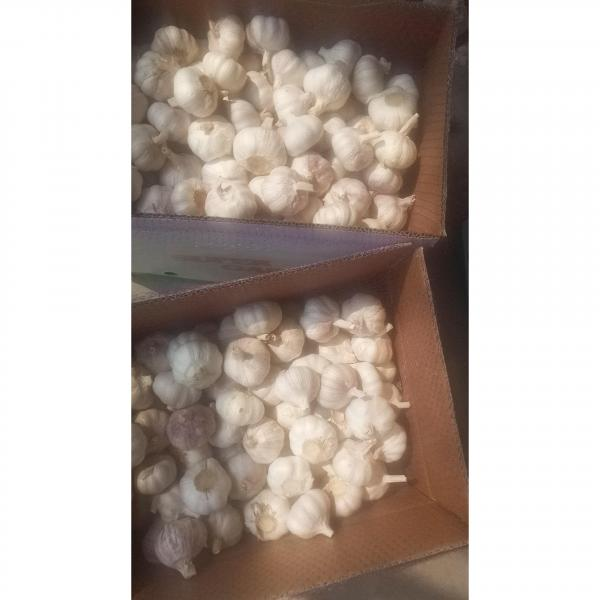 2018 china garlic with 10kg loose carton package to Brazil market . #4 image