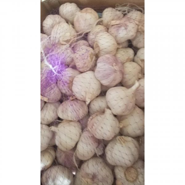 2018 china garlic with 10kg loose carton package to Brazil market . #5 image