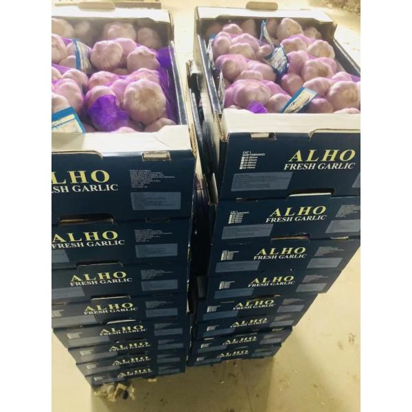 china garlic with 5kg carton package to Brazil #4 image