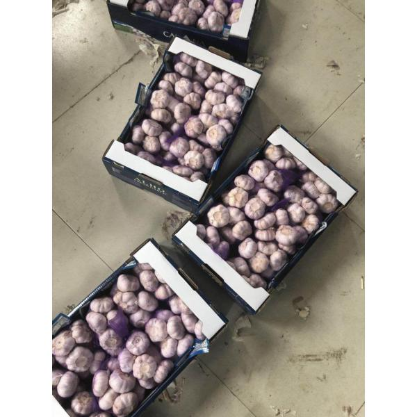 china garlic with 5kg carton package to Brazil #1 image