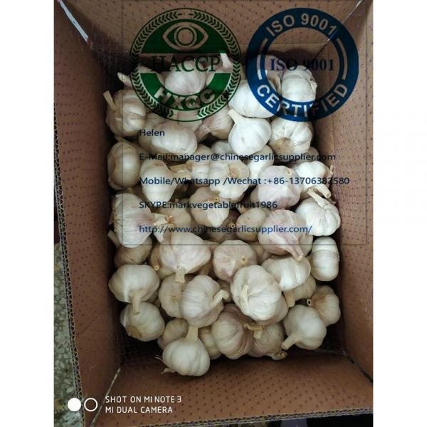 10KG loose carton package normal garlic  are exported to North America market #4 image