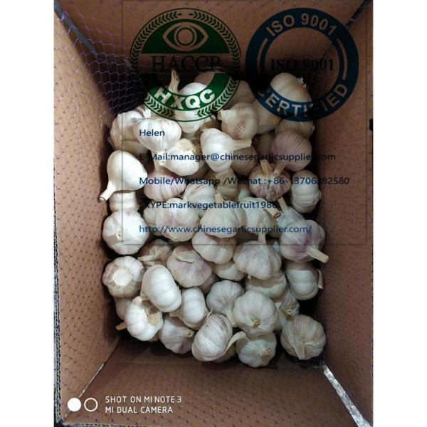 10KG loose carton package normal garlic  are exported to North America market #5 image