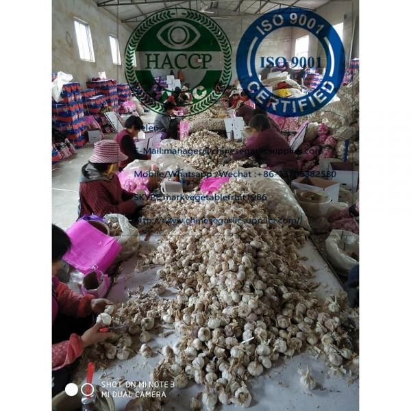 10KG loose carton package normal garlic  are exported to North America market #1 image