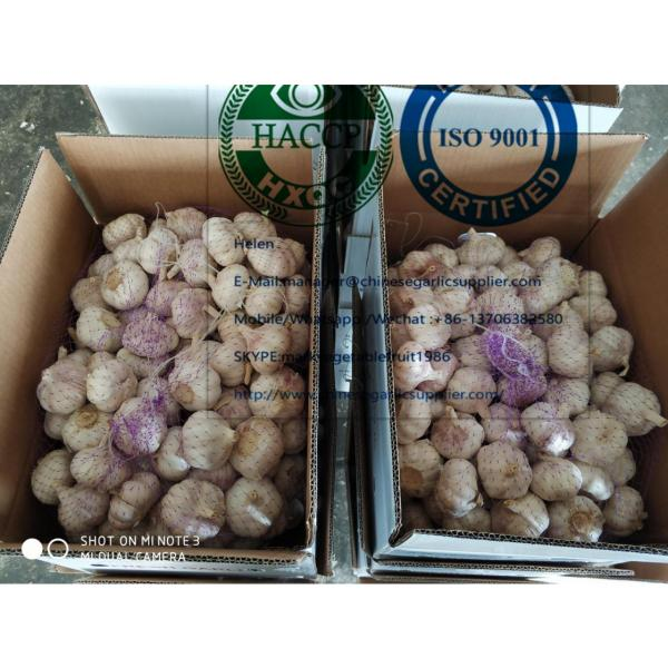 10KG loose carton package normal garlic  are exported to North America market #2 image