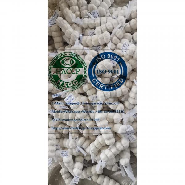 China pure white garlic are (200g*50 bags=10kg/carton ) for Iraq market. #2 image