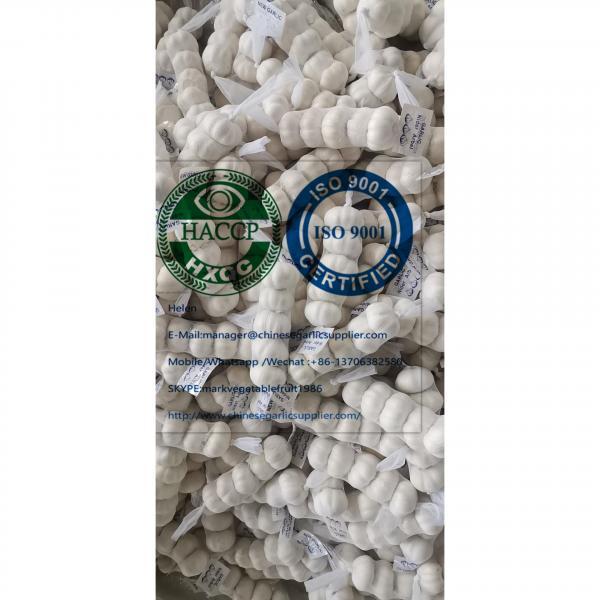 China pure white garlic are (200g*50 bags=10kg/carton ) for Iraq market. #3 image