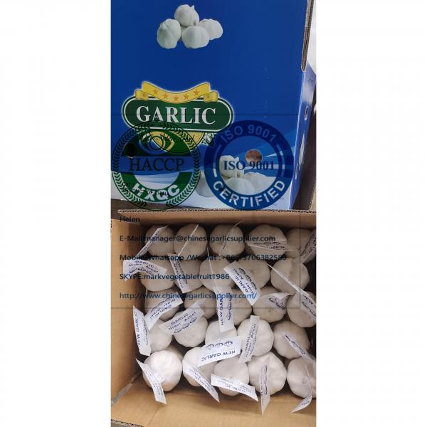 China pure white garlic are (200g*50 bags=10kg/carton ) for Iraq market. #4 image