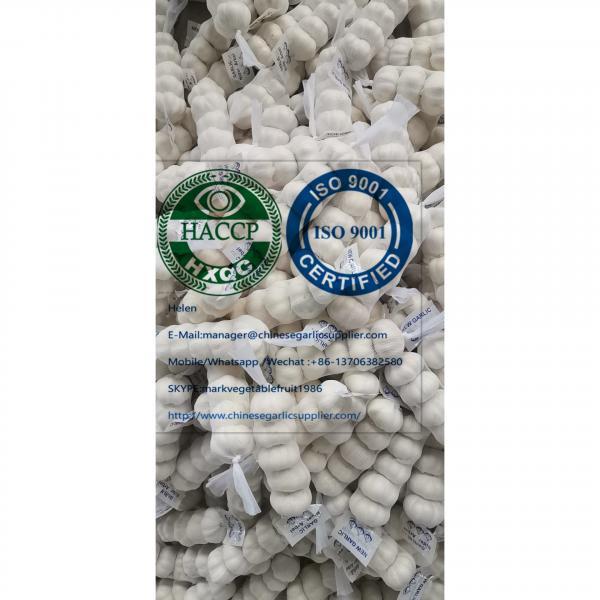 China pure white garlic are (200g*50 bags=10kg/carton ) for Iraq market. #5 image