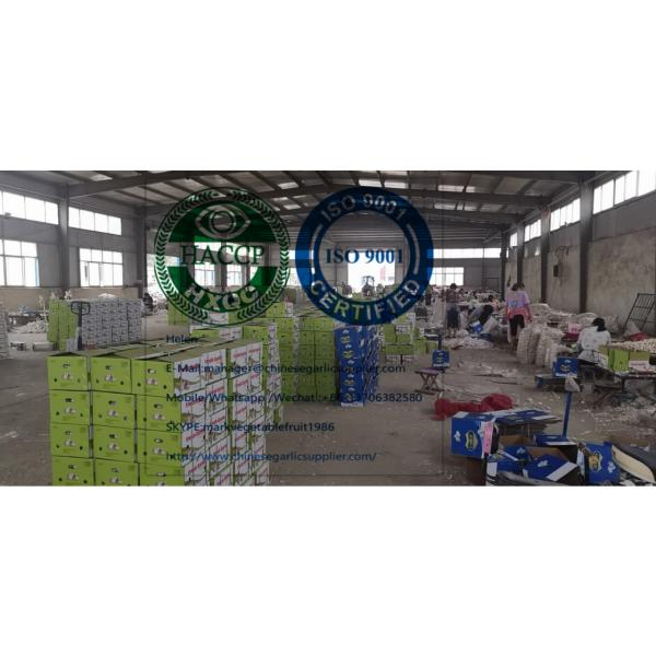 China pure white garlic are (200g*50 bags=10kg/carton ) for Iraq market. #6 image