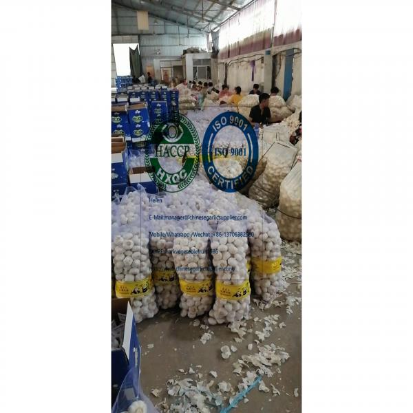 2020 new crop pure white garlic (6.0-6.5 CM) with 10KG meshbag package to Turkey market from china #3 image