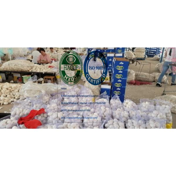 2020 new crop pure white garlic (6.0-6.5 CM) with 10KG meshbag package to Turkey market from china #2 image