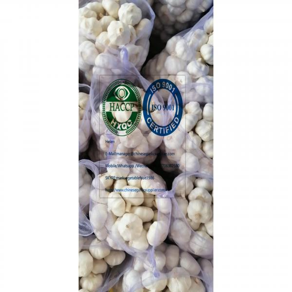 2020 new crop pure white garlic (6.0-6.5 CM) with 10KG meshbag package to Turkey market from china #1 image