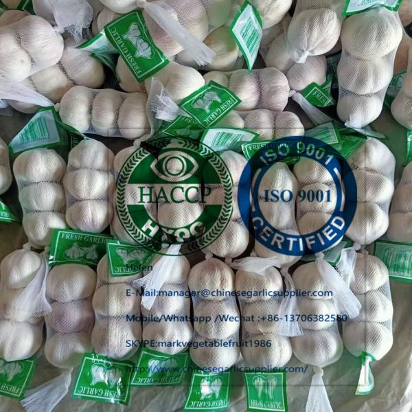 Normal White Garlic With Small Package To Ukraine Market! #1 image