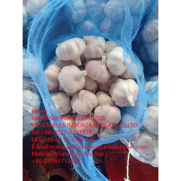 china normal white garlic with meshbag to Dominican Republic market #1 image